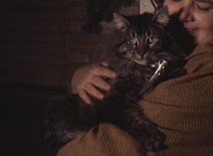 KPRC-TV, January 15: Batman the Cat